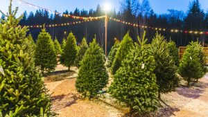 Now Is the Time to Buy a (Live) Christmas Tree This Year
