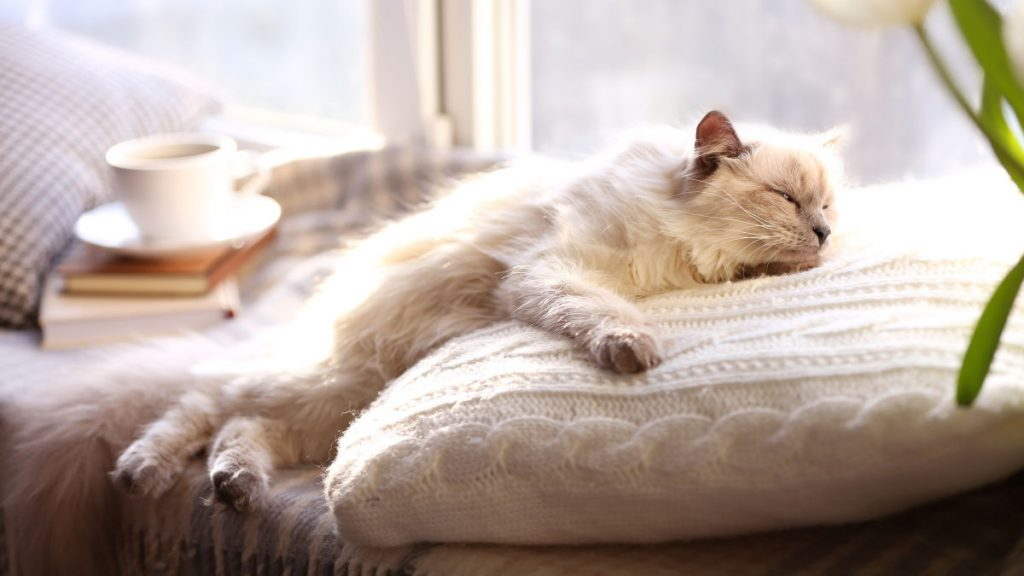 Your Essential Oil Diffuser Could Make Your Pets Sick