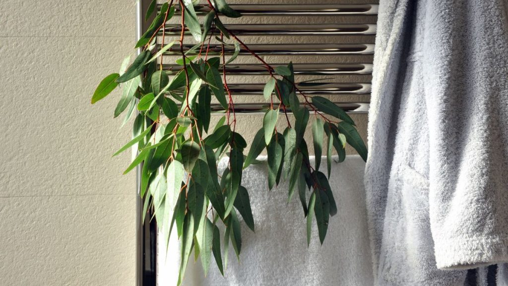 Enhance Your Shower Experience With Eucalyptus