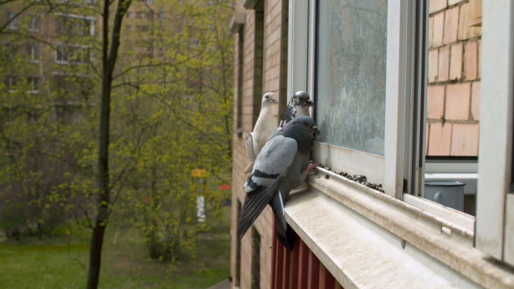 How to Stop Birds From Pecking at Your Windows