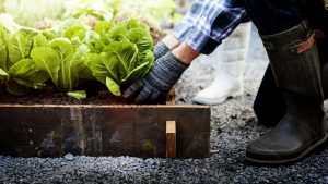 Upgrade Your Gardening Skills With This Free Program