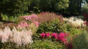 What Is a Rain Garden and How Do You Make One?
