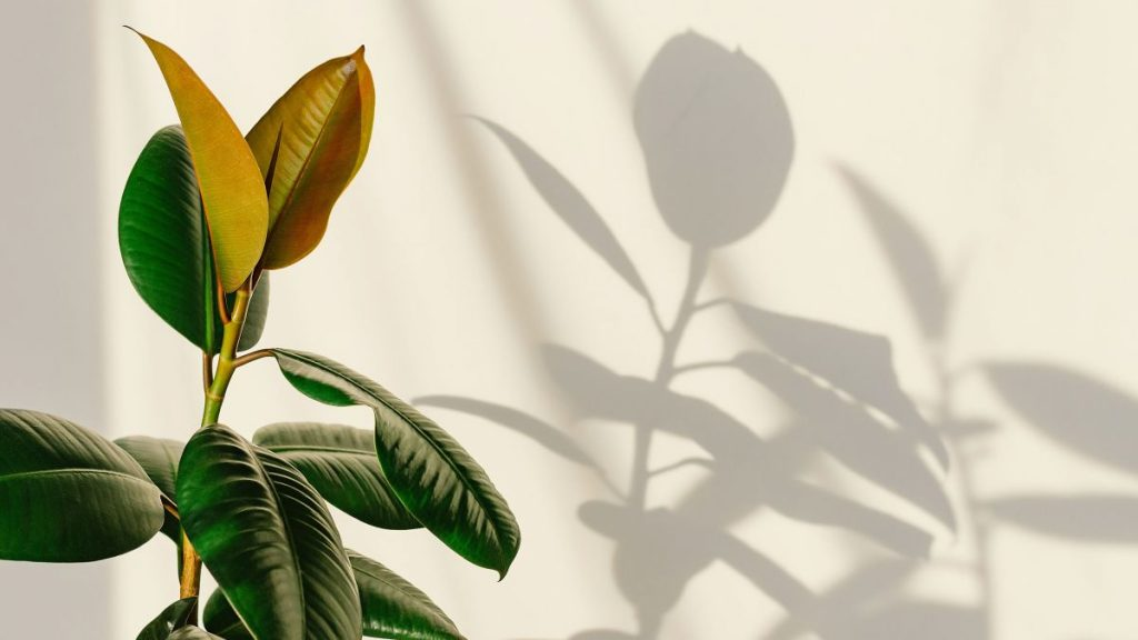 """Find the Best Spots for Houseplants In Your Home With the """"Shadow Trick"""""""